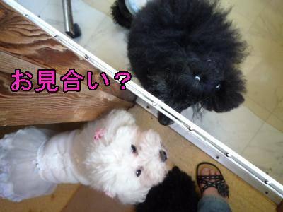 kari_kode-moji400.jpg