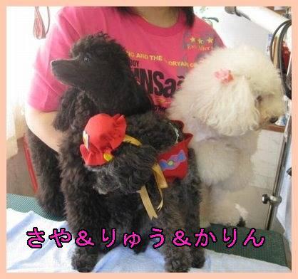 kari_saya_ryu-400moji.jpg