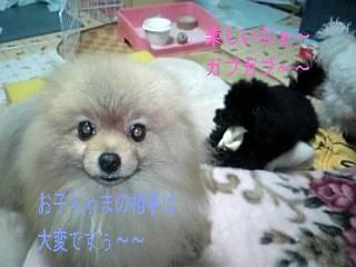 saya_ami-moji.jpg