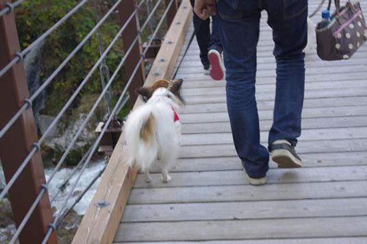つり橋なんて怖くない