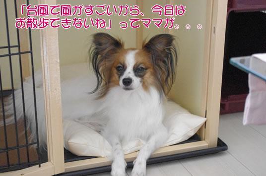 台風で風がすごいから今日はお散歩できないねってママが。。。