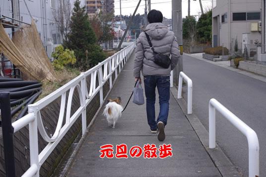 元旦の散歩