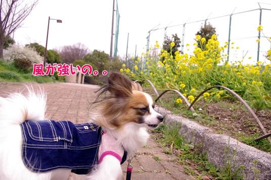 風が強いの。。