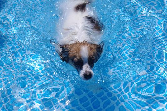 すもも泳ぐ