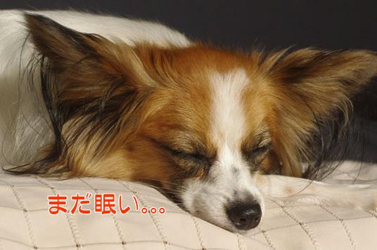 まだ眠い。。。