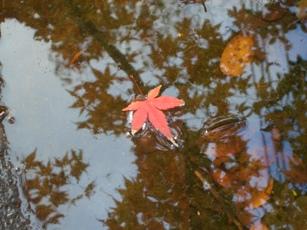 秋の終わり4