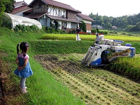 稲刈り監督