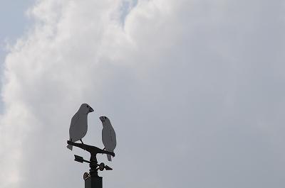 風見文鳥♪