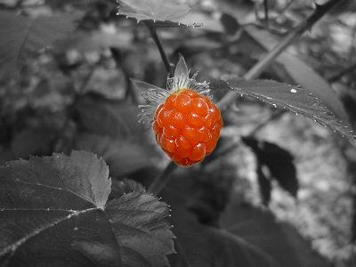 イチゴ。食べられるんかなぁ・・・