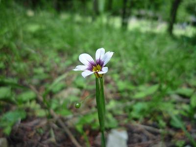 小さい花なんではいつくばって撮りましたw