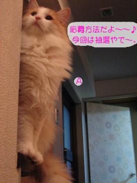 コピー ~ IMG_4177