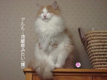 コピー ~ IMG_4005