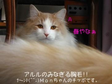 コピー ~ IMG_4328
