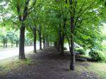 トチノキの並木