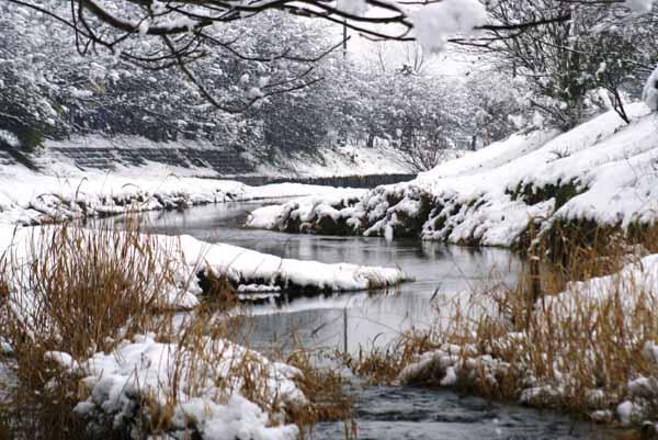 雪の真野川