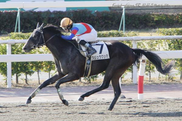 Kujukushima101205-09R_7332raL800.jpg