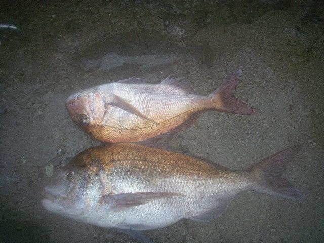 釣果20090809