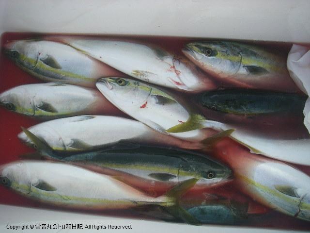 釣果20100124