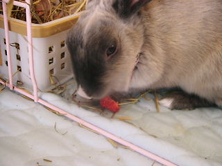 イチゴ好き