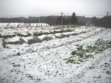 20090101元旦雪
