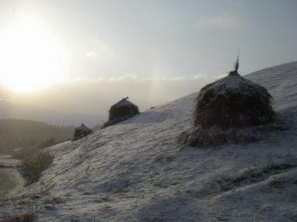 090125雪中わらこづみ2