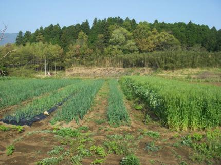 090419三角畑