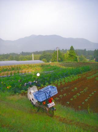 090607夏野菜畑