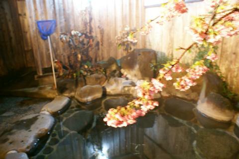 20120305sakura.jpg