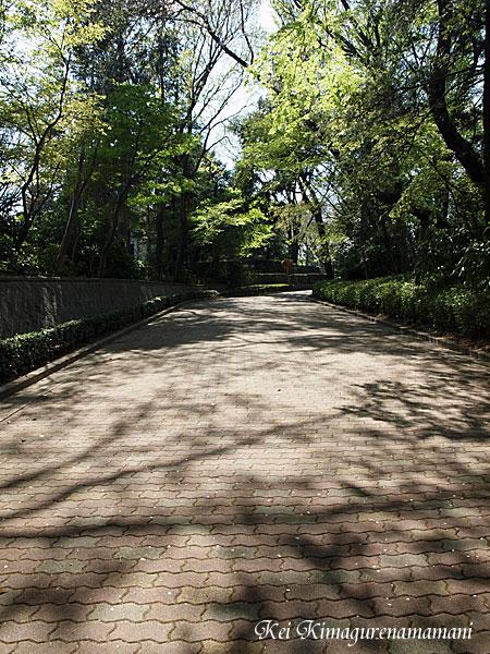 木漏れ日・影♪
