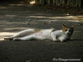 カメラ目線のネコ♪