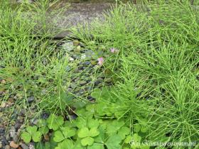 我が家の敷地の雑草♪