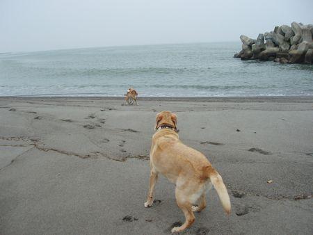 久しぶりの海です。