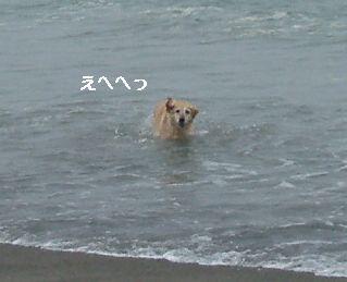 遊泳禁止よ!