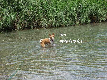 また、川の写真ですみません。