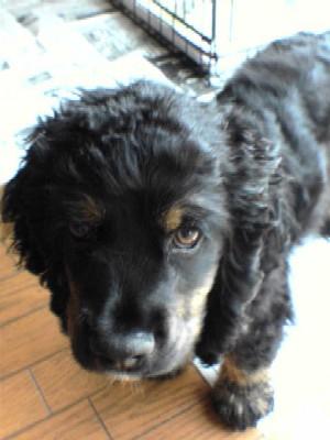 puppy KEN