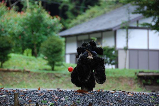 CAMP_毛呂山 229_R