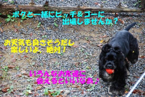 CAMP_毛呂山 222b