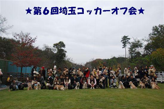 2008_11埼玉コッカー 146_R