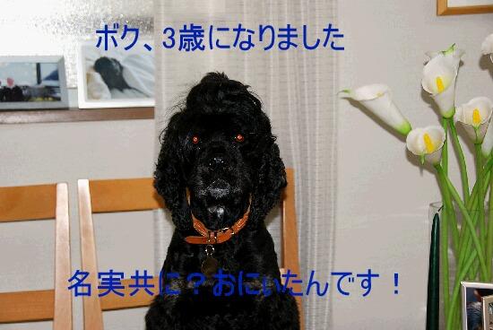 DSC_0043b.jpg
