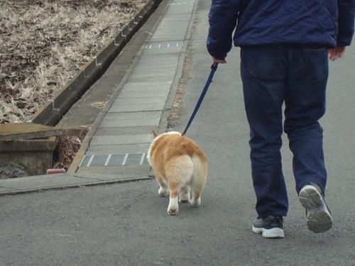 お散歩^^