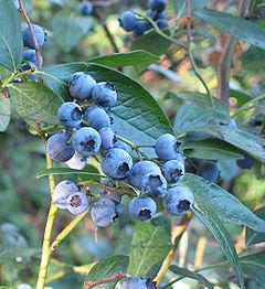 bberry01.jpg