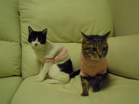 セーターを着ています