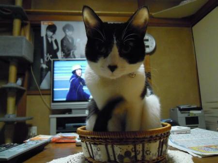 カゴ入り猫