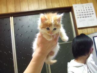 河原の子猫