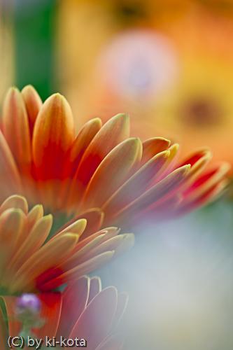 花の美術館にて
