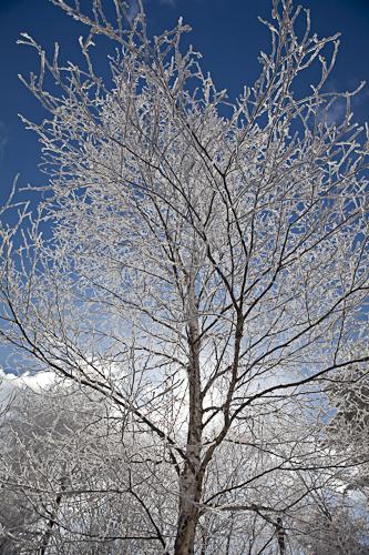 逆光に輝く樹氷