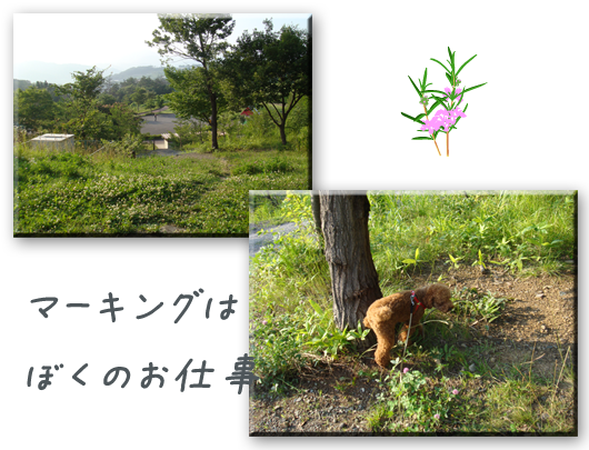 20080712-02.png