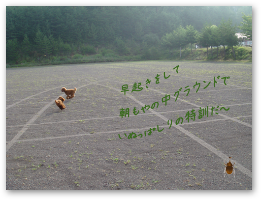 20080716-01.png