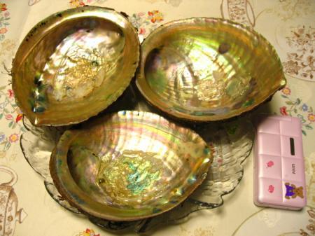 6_August_2008 アワビ