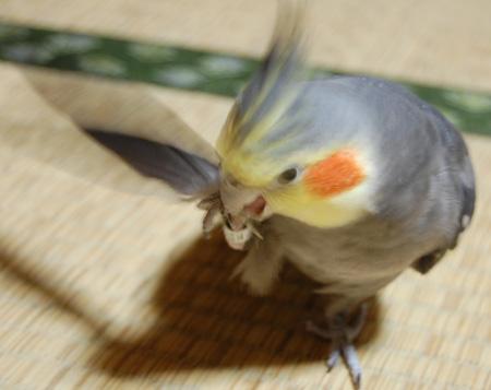 羽根を使って